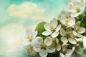 Apple blossoms on soft blue background — Stock Photo