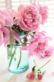 Pink peonies in glass jar — Stock Photo