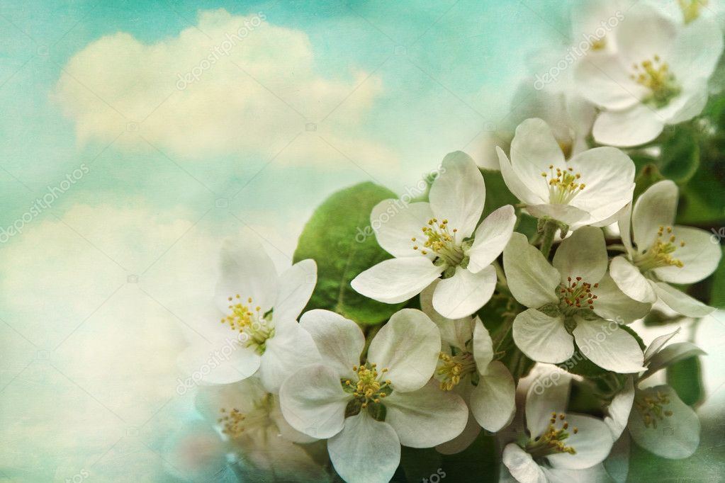Spring apple blossoms on soft blue background — Stock Photo #9990683
