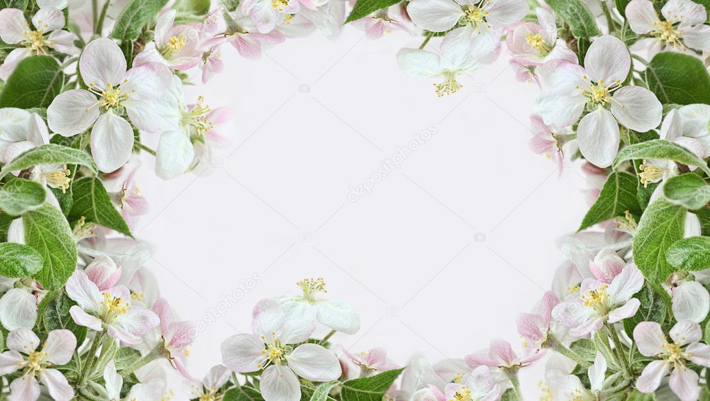 Spring apple blossom border on pink background  Zdjcie stockowe #9990730