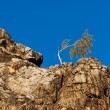 Lonely tree on the slope of the rock against the blue sky — Stock Photo