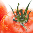 Background of the tomato with water drops — Stock Photo