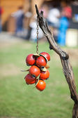 Wood berries hang on a branch — Stock fotografie