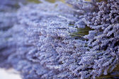 Background of dried lavender flowers at the fair — Stock Photo