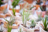 Background of cactus and succulents in pots — Stockfoto