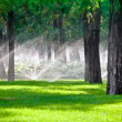 Foto Stock: Sprinkler in a lawn with tree