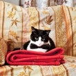 Stock Photo: Elegant cat on sofa