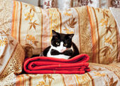 Elegant cat on sofa — Stockfoto