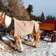 Foto Stock: Horse Sledge in Dolomiti, Italy