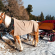Horse Sledge in Dolomiti, Italy - Stock Photo