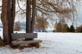 Isolated wooden bench with trees in winter — Stock Photo