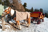 Horse Sledge in Dolomiti, Italy — Stockfoto