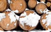 Log stack lumber with snow — Foto de Stock