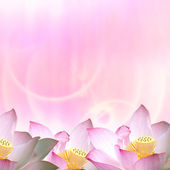 Beautiful Lotus for adv or others purpose use — Stock Photo