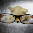Glasses with cute dog look at the pencial isolate with white background — Stock Photo