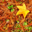 Picture style red maple leaves, golden autumn - Stock Photo