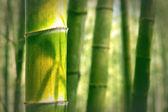 Fundo do bambu — Fotografia Stock