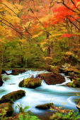 Autumn Color of Oirase River, Japan — Stock Photo