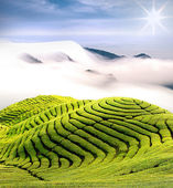 Dramatic clouds and tea garden — Stock Photo