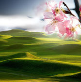 Nice golf place with sakura flower — Stock Photo