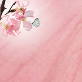 Sakura for background or texture use — Stock Photo