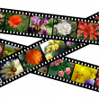 Floral filmstrips illustration — Stock Photo