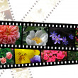 Filmstrips of flowers - Stock Photo