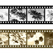 Stock Photo: Filmstrips negatives of flowers