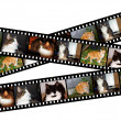 Stock Photo: Filmstrips of cats