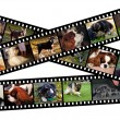 Royalty-Free Stock Photo: Canine filmstrip illustration