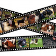 Canine filmstrip illustration - Stock Photo