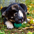 Crossbreed puppy — Stock Photo