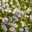 Meadow wildflowers — Stock Photo #8161572