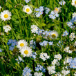 Meadow wildflowers — Stock Photo #8161604