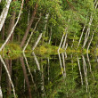Birches reflections — Stock Photo #8161983
