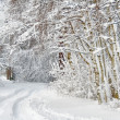 Wintry road through birch forest — Stock Photo