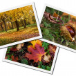 Autumn photos collage — Stock Photo