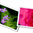 Flower Postcards — Foto de Stock