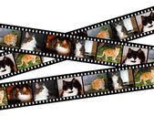 Filmstrips of cats — Stock Photo
