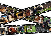 Canine filmstrip illustration — Stock Photo