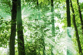 Solen strålar — Stockfoto