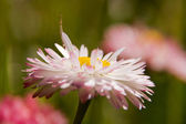 Meadow wildflowers — Stock Photo