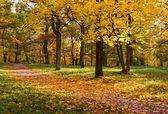 秋天的公园树木 — 图库照片