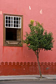 Red wall and tree — Stock Photo