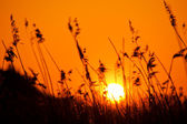 Sunset over meadow — Stock Photo