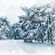 Foto Stock: Winter scene