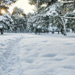 Wintry forest — Stockfoto #8521133