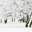Winter trees — Stockfoto #8521137
