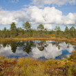 Bog lake — Stock Photo