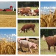 Stock Photo: Farming Collage